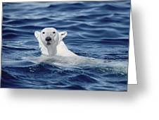 Polar Bear Swimming Baffin Island Canada Greeting Card by Flip Nicklin