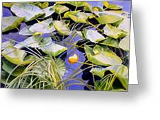 Pond Lilies Greeting Card by Sharon Freeman