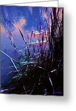 Pond Reeds At Sunset Greeting Card by Joanne Smoley