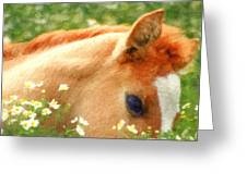 Pony In The Poppies Greeting Card by Tom Mc Nemar