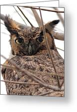 Portrait Of A Great Horned Owl Greeting Card by Wingsdomain Art and Photography