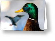 Portrait Of Duck 2 Greeting Card by Bob Orsillo