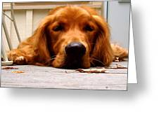 Posing Puppy Greeting Card by Jamie Riddle