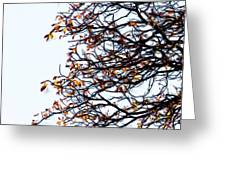 Praha Tangled Tree Greeting Card by Shawn Wallwork
