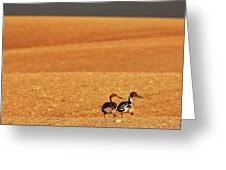 Prairie Storm And Ducks Canada Greeting Card by Mark Duffy
