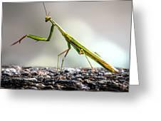 Praying Mantis  Greeting Card by Bob Orsillo
