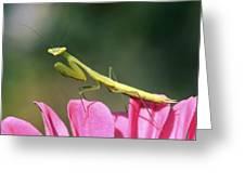 Praying Mantis Greeting Card by Photostock-israel