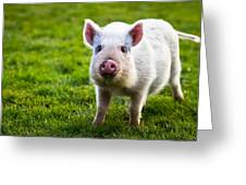 Precocious Piglet Greeting Card by Justin Albrecht