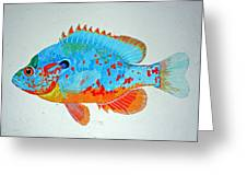 Pretty Blue Fish Greeting Card by Don Seago
