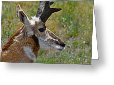 Pronghorn Buck profile Greeting Card by Karon Melillo DeVega