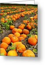 Pumpkin Patch Greeting Card by Carol Groenen