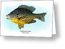 Pumpkinseed Sunfish Greeting Card by Ralph Martens