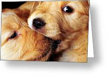 Puppy Love Greeting Card by Laura Mountainspring