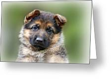 Puppy Portrait Greeting Card by Sandy Keeton