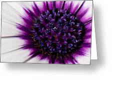 Purple Color Burst Greeting Card by Michael Herb