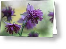 Purple Columbine Greeting Card by Andrea Lazar