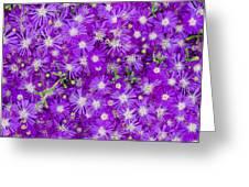 Purple Flowers Greeting Card by Frank Tschakert