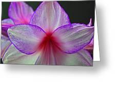 Purple Haze Greeting Card by Donna Shahan