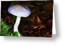 Purple Mushroom Russula Cyanoxantha Greeting Card by Andrew Pacheco