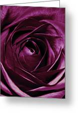 Purple Passion Greeting Card by Cathie Tyler