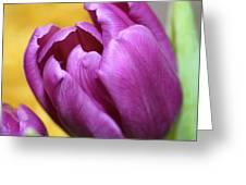 Purple Spring Greeting Card by Linda Sannuti