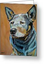 Queensland Heeler Greeting Card by Kellie Straw