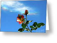 Rainbow Cloud And Sunlit Roses Greeting Card by CML Brown