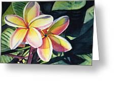 Rainbow Plumeria Greeting Card by Marionette Taboniar