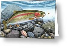 Rainbow Trout Stream Greeting Card by JQ Licensing