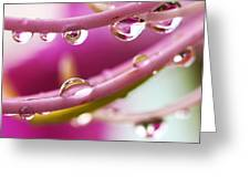 Raindrops Greeting Card by Marilyn Hunt