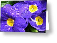 Raindrops On Blue Flowers Greeting Card by Carol Groenen