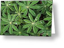 Raindrops On Lupine Greeting Card by Greg Vaughn - Printscapes