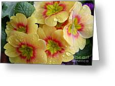Raindrops On Yellow Flowers Greeting Card by Carol Groenen