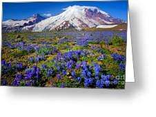 Rainier Lupines Greeting Card by Inge Johnsson