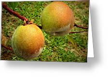 Rainy Day Peaches Greeting Card by Joyce Dickens