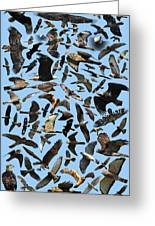 Raptor Roundup Greeting Card by ML Lombard