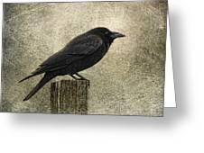 raven Greeting Card by Elena Nosyreva