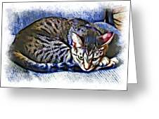 Ready For Napping Greeting Card by David G Paul