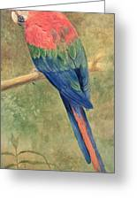 Red And Blue Macaw Greeting Card by Henry Stacey Marks