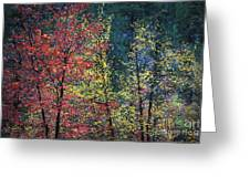Red And Yellow Leaves Abstract Horizontal Number 1 Greeting Card by Heather Kirk
