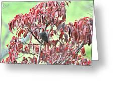 Red Bellied Woodpecker in Dogwood Greeting Card by Alan Lenk