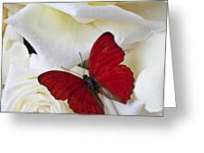 Red butterfly on white roses Greeting Card by Garry Gay