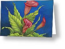 Red Calla Lillies Greeting Card by Carol Sabo