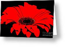 Red Daisy On Black Background Greeting Card by Marsha Heiken