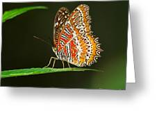 Red Lacewing Butterfly Greeting Card by Louise Heusinkveld