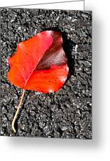 Red Leaf On Asphalt Greeting Card by Douglas Barnett