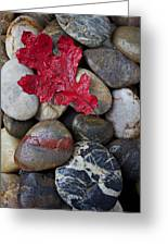 Red Leaf Wet Stones Greeting Card by Garry Gay