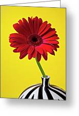 Red Mum Against Yellow Background Greeting Card by Garry Gay