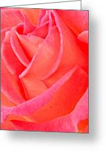 Red No More Greeting Card by Gwyn Newcombe