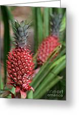 Red Pineapples Greeting Card by Sabrina L Ryan